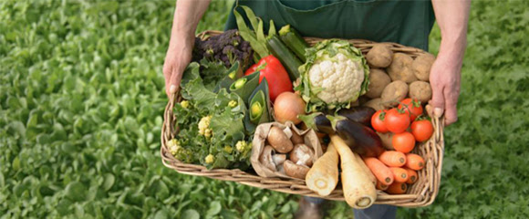 L'agricultura ecològica arrelada al territori i la seva cultura és l'eix d'una nova proposta d'estudis de grau de la UVic-UCC
